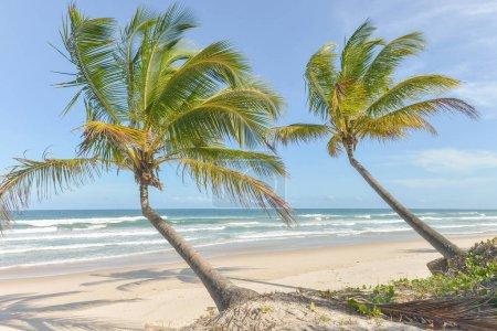 impressive paradise beach at the Itacare Bahia Brazil