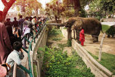 People are feeding an elephant SUZI in the Lahore