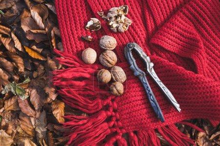 Photo pour Détendez-vous sur la promenade, casse-noix et noix sur l'écharpe dans la forêt près du feu de joie - image libre de droit