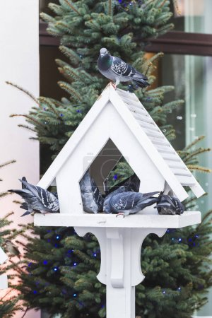 outdoor bird feeder in fur-trees