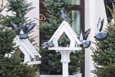 outdoor bird feeders in fur-trees