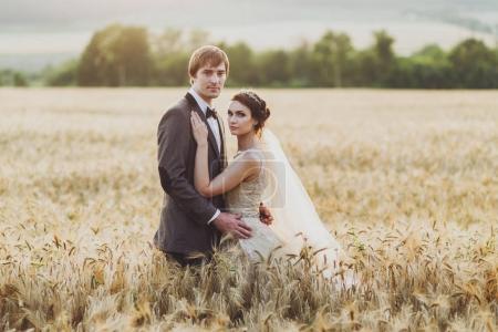 Aime le couple dans le champ de blé