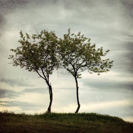 tree. Depression and melancholy mood.