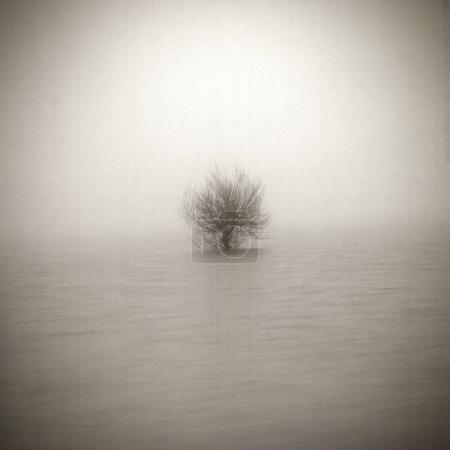 Photo pour Arbre solitaire en arrière-plan d'art texturé vieilli. Dépression et humeur mélancolique. La solitude abstraite et la tristesse. Effet shabby et vintage - image libre de droit