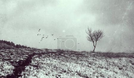 Photo pour Arbre solitaire en arrière-plan art texturé âgés. Dépression et mélancolie de l'humeur. Abstrait solitude et la tristesse. Oiseaux en vol sur l'horizon - image libre de droit