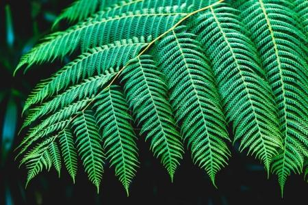 Fern leaves texture