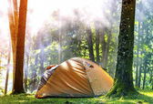 Camping tent in green forest in spring sunny morning with fog ha