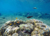 Underwater landscape with tropical fishes. Coral reef landscape with parrotfish