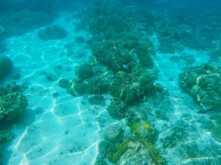 Sea animals and plants. Oceanic environment underwater photo.