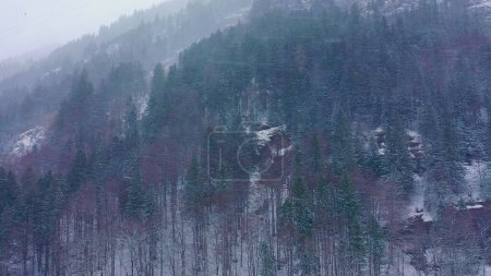 Flight over a fir forest in winter - snow capped trees - aerial photography