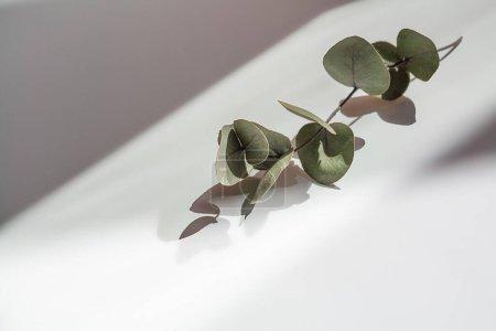 Photo pour Branche d'eucalyptus sur la table, ombres géométriques floues, sélectionner - image libre de droit