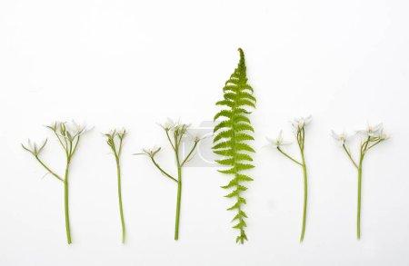 Photo pour Diverses plantes sur carton sont disposées en rangée et des herbes sur un fond de papier clair. - image libre de droit