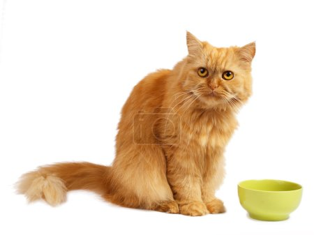 red cat with green bowl