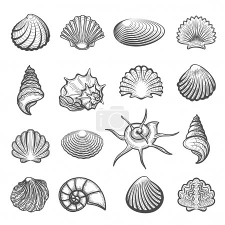 Illustration for Vector hand drawn sea shell set. Shells drawing sketch isolated on white - Royalty Free Image