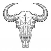 Buffalo skull vector sketch Vintage hand drawn animals head skull