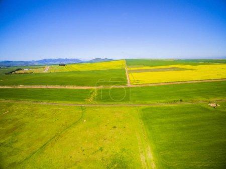 yellow canola fields landscape