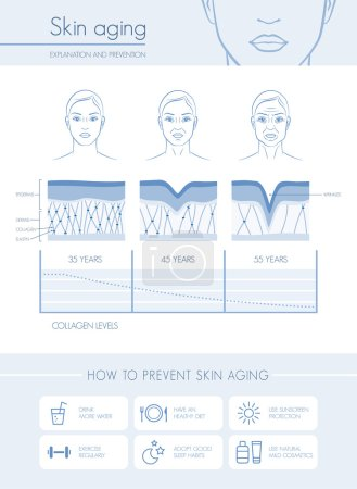 Skin aging diagrams and stages
