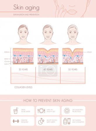 Illustration for Skin aging diagrams and stages, anti aging prevention tips and female faces - Royalty Free Image