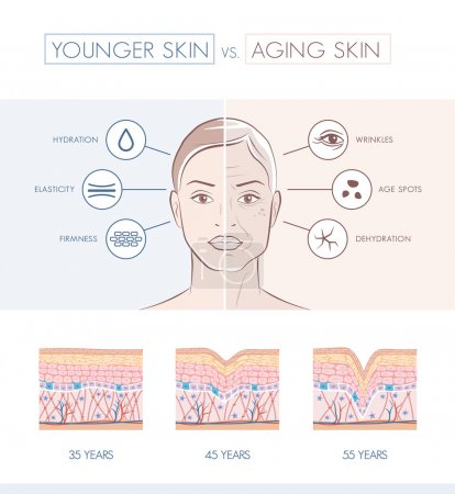 Young healthy sking and older skin