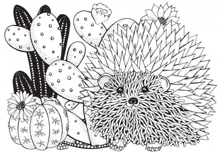 Succulents and prickly hedgehog