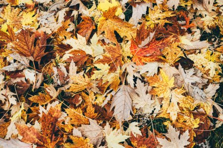 Photo for Autumn falling leaves background - Royalty Free Image