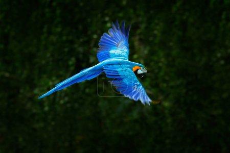 Wildlife scene with blue parrot