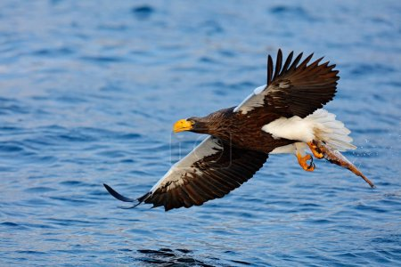 Eagle flying above sea