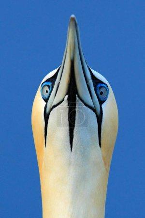 Photo pour Scène de la faune d'oiseaux aquatiques magnifique sur la mer dans la nature - image libre de droit