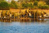 Sloni pitné vody