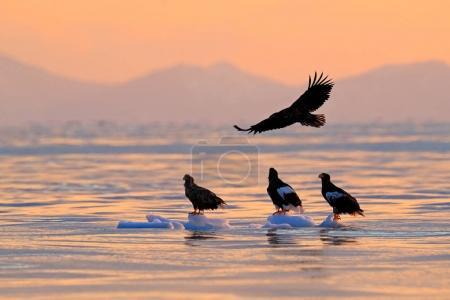 Eagle flying above the sea