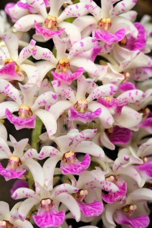 Wild orchid blooming flower