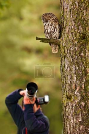 Owl with photographer in forest