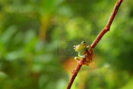 Frog sitting on the branch
