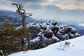 Winter in the Europe landscape