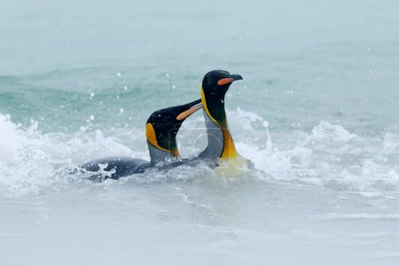 Penguins swimming in sea water