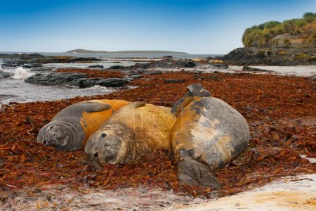Seals lying in water pond