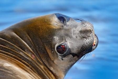 Big sea animal with open mouth