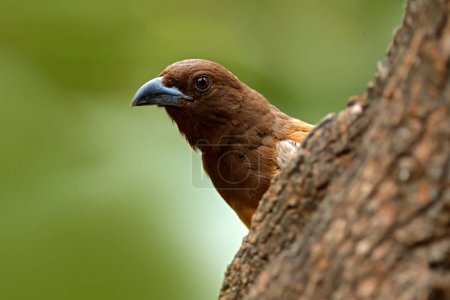 Portrait of bird from Ranthambore
