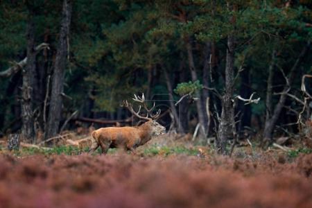 Autumn animal behavior in Netherlands