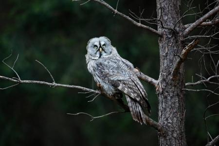 Owl in dark forest