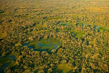 Pantanal landscape, green lakes and small ponds with trees. Aerial view on tropic forest, Pantanal, Brazil. Wildlife nature, tropic jungle. Water in green vegetation