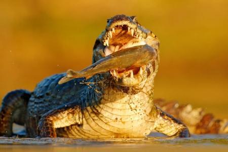 Detail portrait of danger reptile