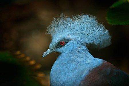 Photo pour Gros plan d'un bel oiseau exotique sur fond sombre - image libre de droit
