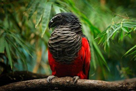 Photo pour Gros plan d'un bel oiseau exotique perché sur une branche - image libre de droit
