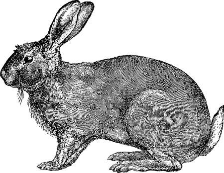 Photo pour Vieux lapin d'illustration de livre - image libre de droit