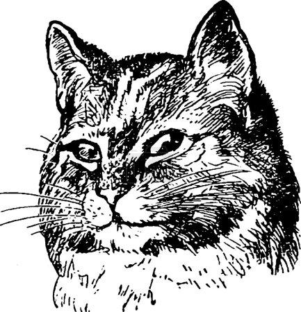 Vintage image cat