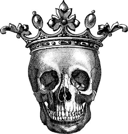Vintage image human skull