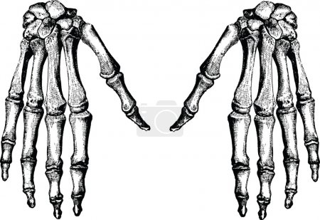 Vintage image hand bones