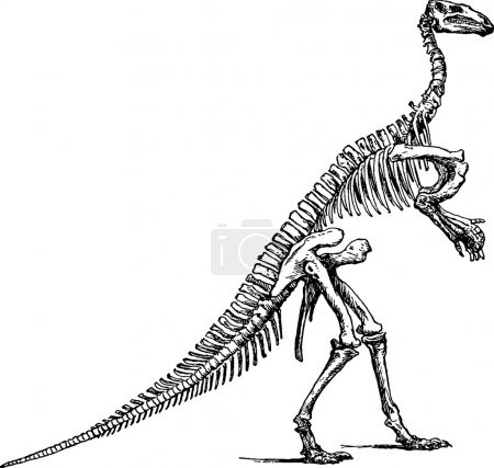 Vintage illustration iguanodont skeleton