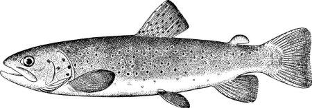 Photo pour Vieux livre de poisson illustration - image libre de droit
